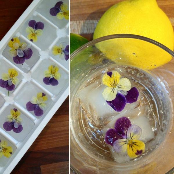fleurs comestibles congelées dans des glaçons