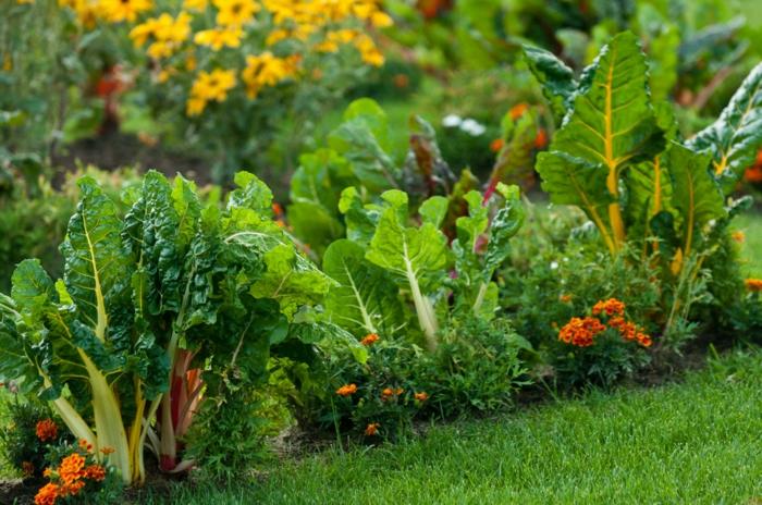 fleurs-et-légumes-conseils-jardinage-au-naturel
