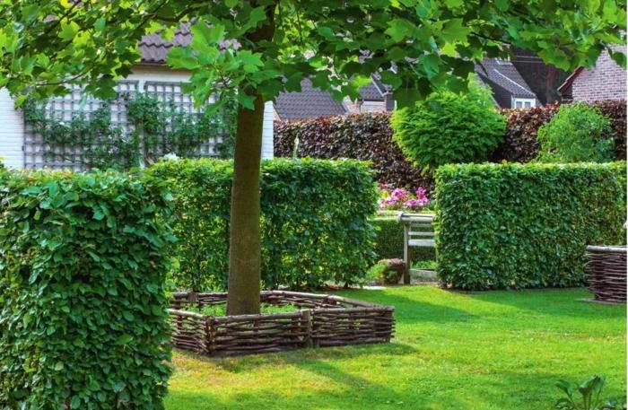 haie champêtre au jardin idée biodiversité jardiner au naturel