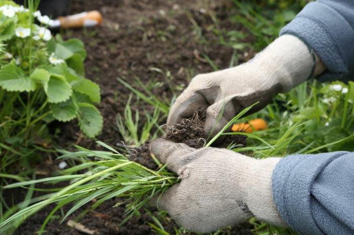 jardiner au naturel désherber le jardin sans des produits toxiques