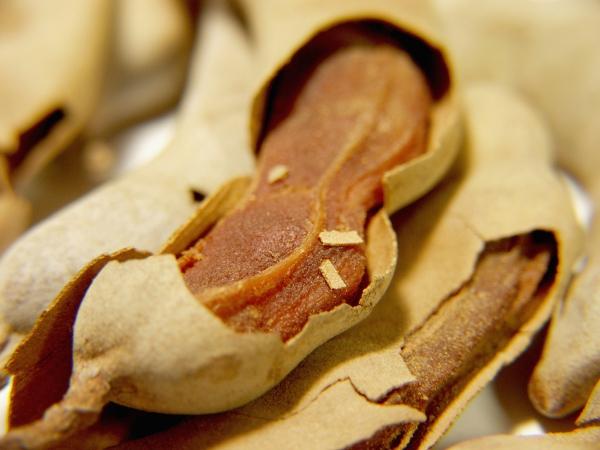 le fruit tamarin casser la coque