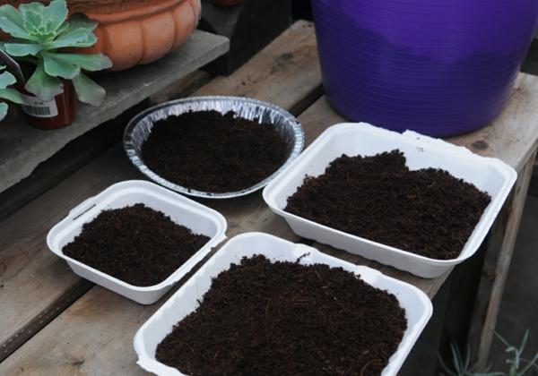 mélange terreau pour micro-pousses