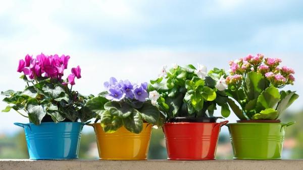 plante porte-bonheur pour la bonne humeur