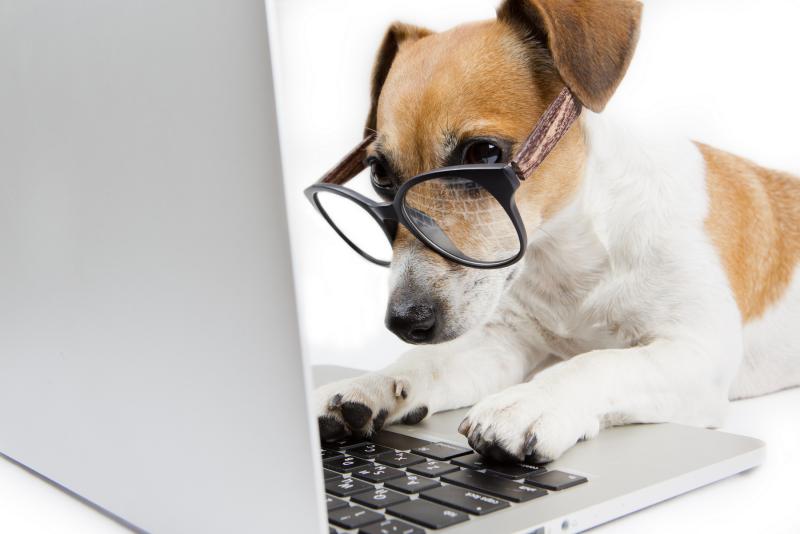 quelle race de chien choisir bonne recherche