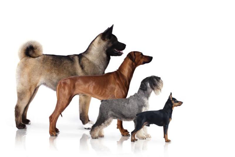 quelle race de chien choisir de taille différente