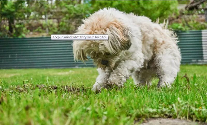 quelle race de chien choisir il aime creuser