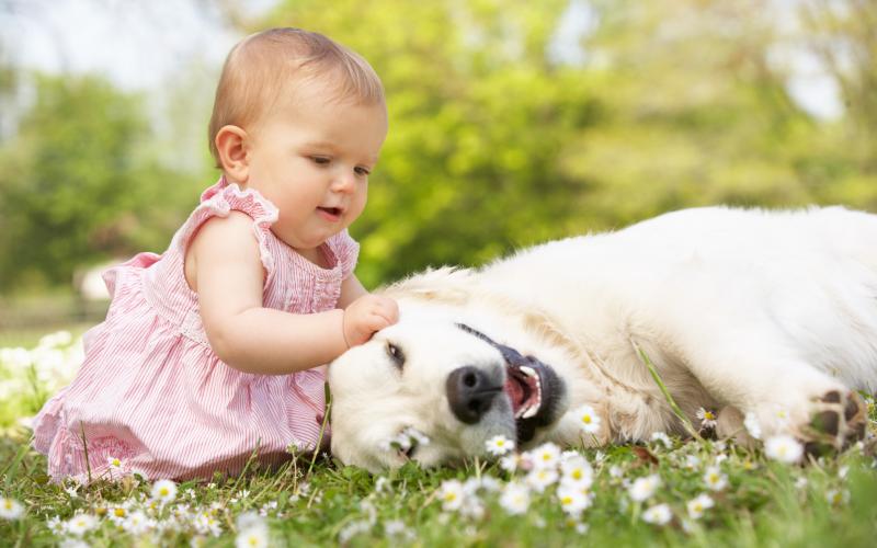 quelle race de chien choisir petits enfants à la maison
