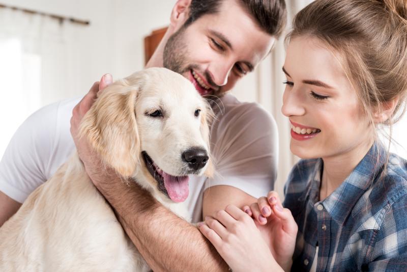 quelle race de chien choisir pour quels besoins adopter