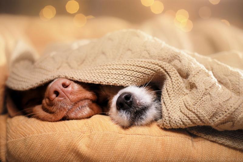 quelle race de chien choisir tout est calme