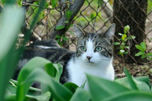 Éloigner les animaux du jardin à l'aide du vinaigre