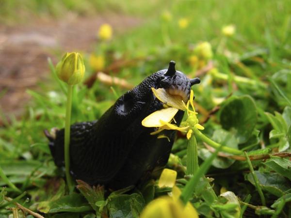 Éloigner les limaces et les escargots des plantes à l'aide de vinaigre