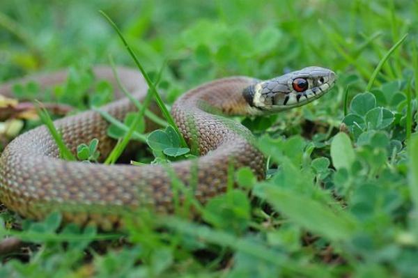 Chasser les serpents avec du vinaigre