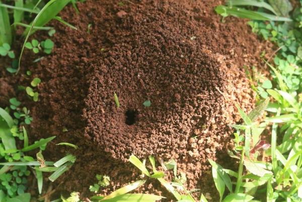 Se débarrasser des fourmis en utilisant du vinaigre