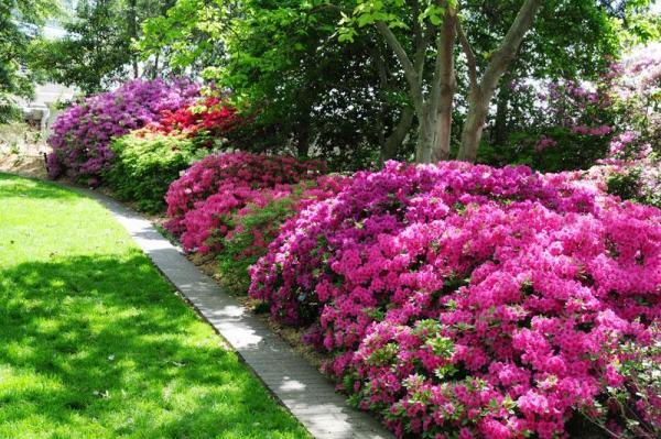 Stimuler le développement des plantes acidophiles avec du vinaigre
