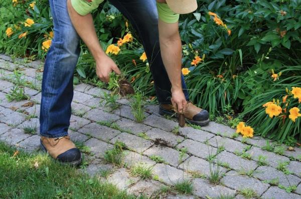 Supprimer les mauvaises herbes des allées de jardin avec du vinaigre