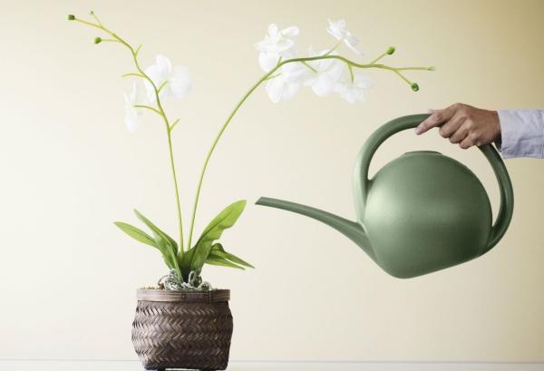 comment arroser une orchidée avec arrosoir