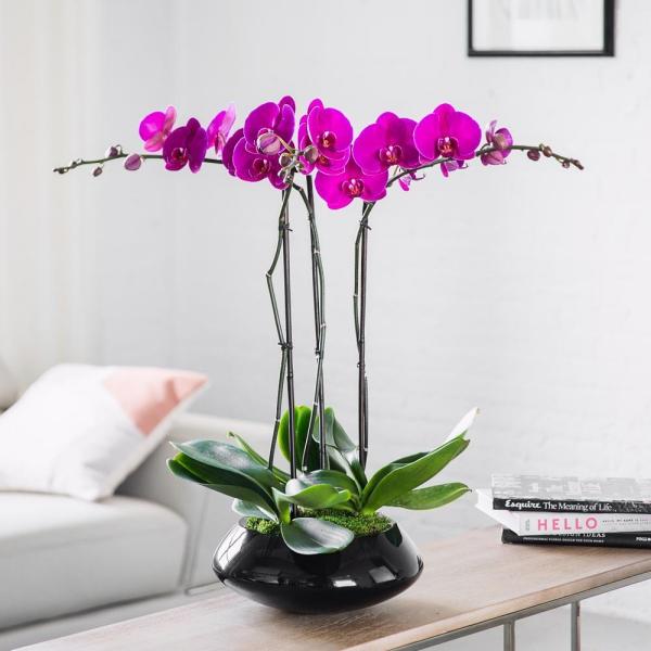 comment arroser une orchidée correctement