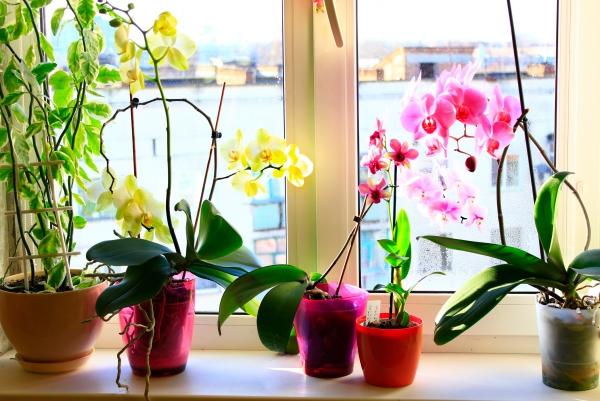 comment arroser une orchidée efficacement