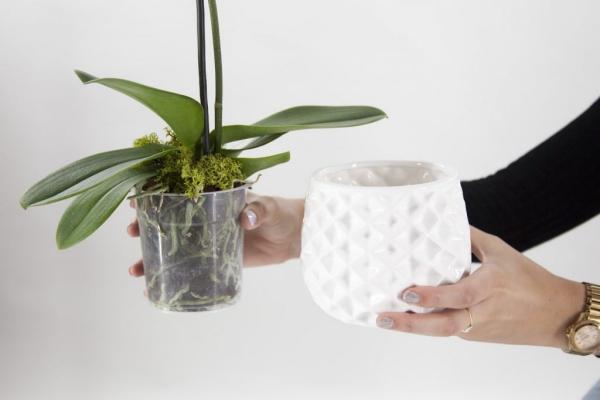 comment arroser une orchidée en hiver
