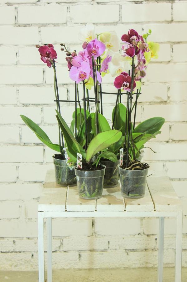comment arroser une orchidée pour avoir belles feuilles