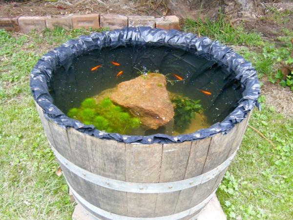 diy mini-bassin aquatique de jardin avec des poissons