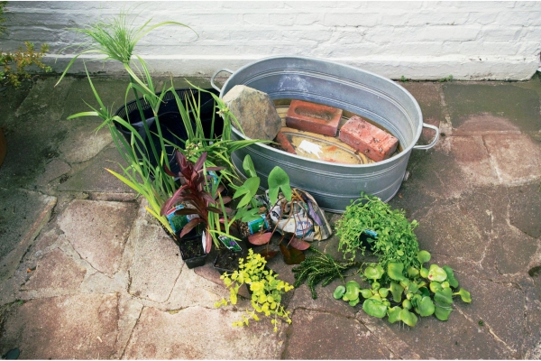 diy mini-bassin aquatique de jardin première étape