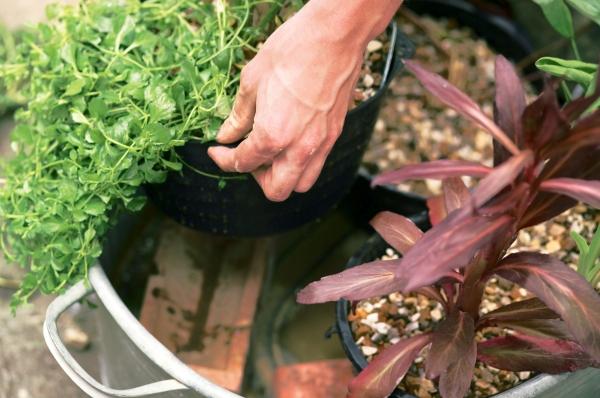 diy mini-bassin aquatique de jardin quatrième étape