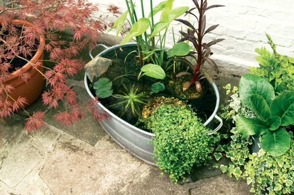 diy mini-bassin aquatique de jardin