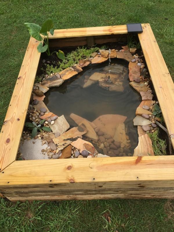 diy mini-bassin aquatique d'extérieur