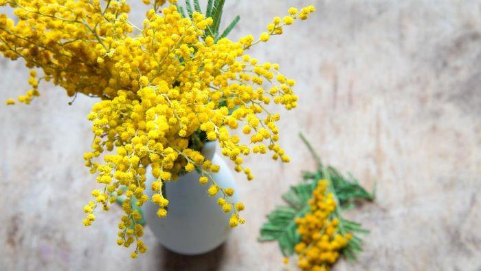 huile essentielle de mimosa diffuseur de parfum bâtonnet
