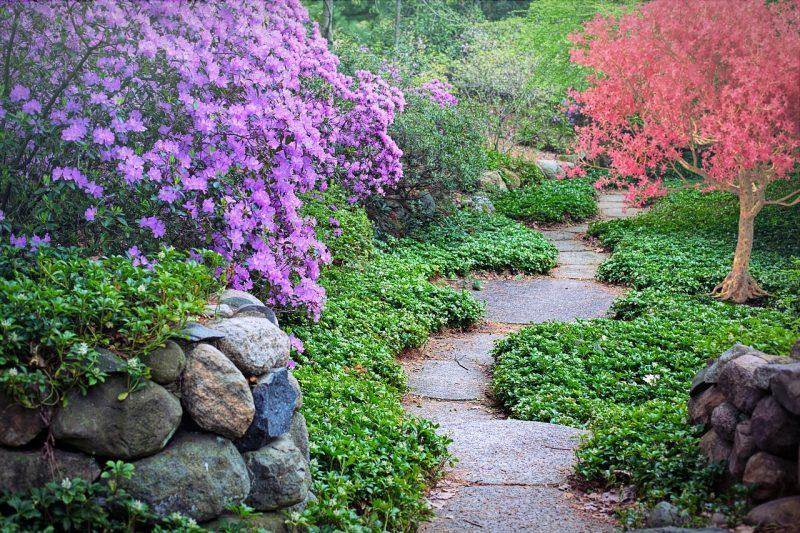 jardin tropical allée serpentante