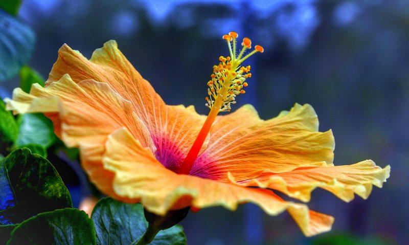 jardin tropical couleurs dégradées
