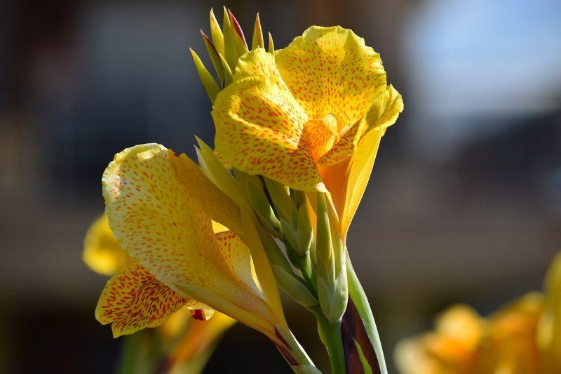 jardin tropical espèce de plante herbacée