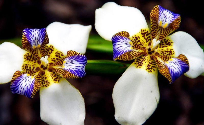 jardin tropical iris ambulant