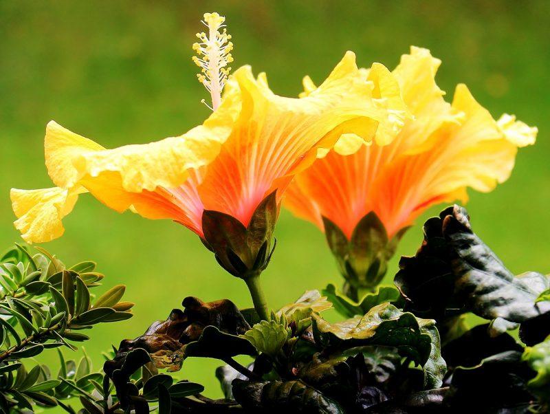 jardin tropical plante connue depuis la haute Antiquité