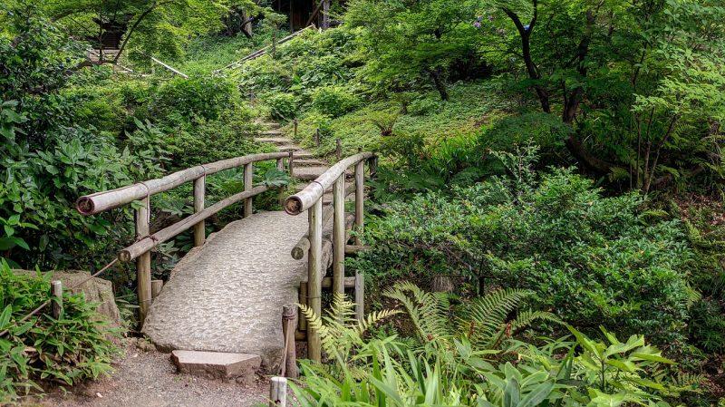 jardin tropical un point focal
