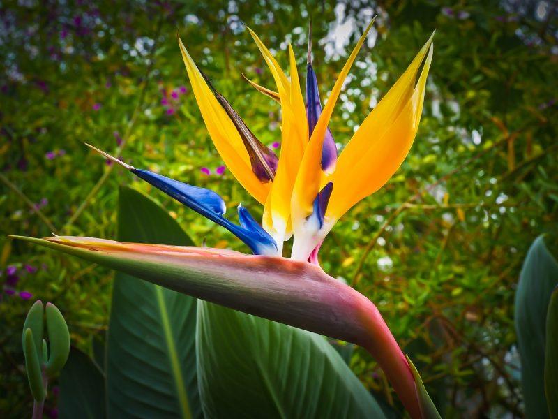 jardin tropical une plante exotique