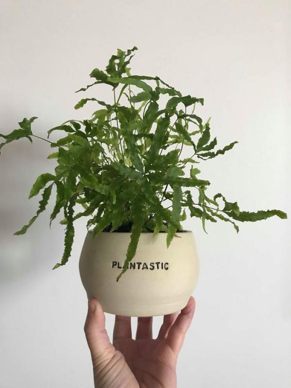 la céramique plantastique ou phantastique