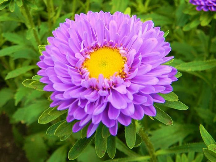le langage des fleurs élégance et fidélité