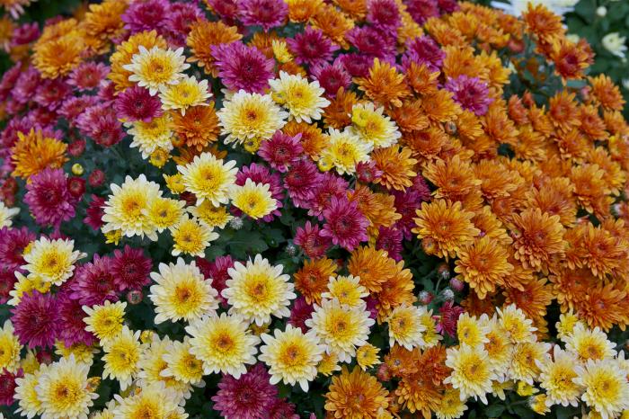 le langage des fleurs beaucoup de variétés
