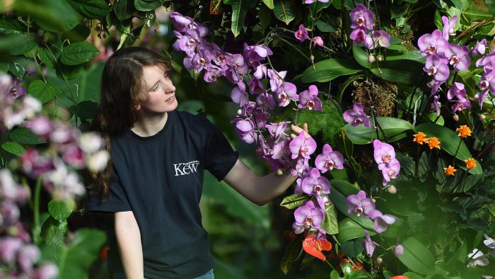 le langage des fleurs couronné d'orchidées