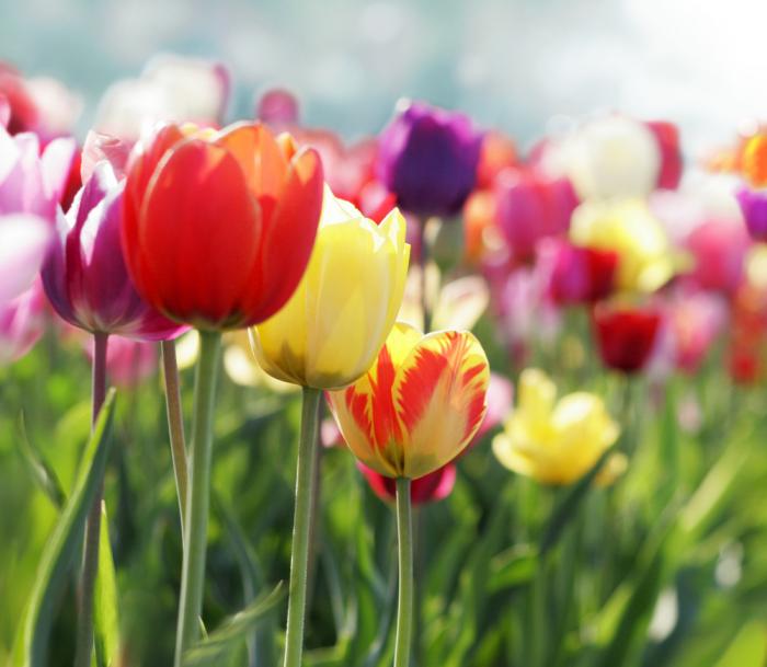 le langage des fleurs en multiples variétés