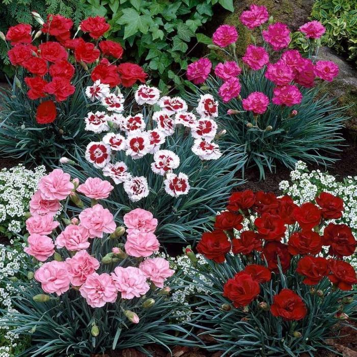 le langage des fleurs la fleur des dieux