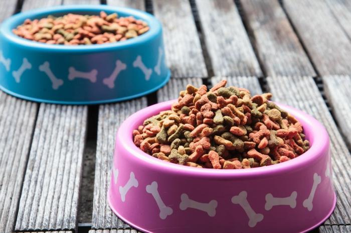 mix de croquettes recette maison croquette chien