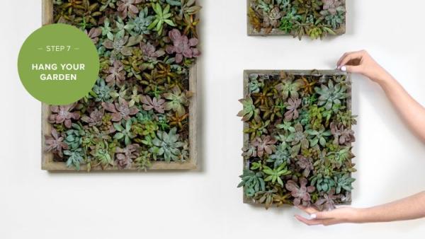 plantes succulentes accrocher les cadres