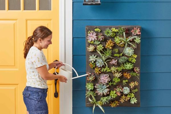 plantes succulentes arrosage et brumisation