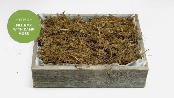 plantes succulentes boîte remplie