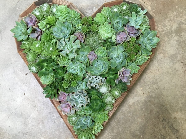 plantes succulentes cadre coeur