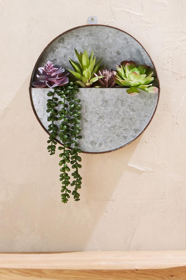 plantes succulentes comme une poche