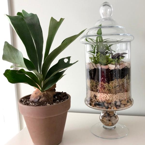 plantes succulentes dans un bocal
